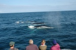 Whales off Montague Island 29/08/10